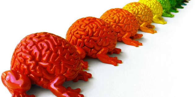 usa il cervello per dimagrire senza dieta ma con gusto