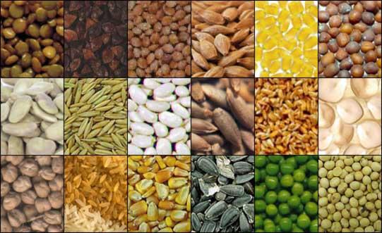 Dimagrire bio:vuoi una pancia piatta e sgonfia? prova con i semi
